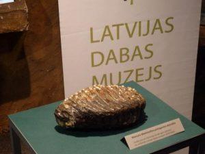 Autors: Latvijas Dabas muzejs